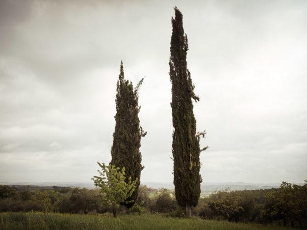 Cipressi toscani